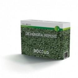 DICONDRA REPENS - Bottos / 1 Kg