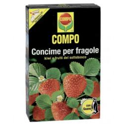 Fragole - Compo / 1 Kg