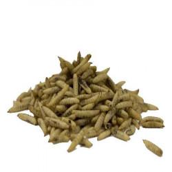 Nutriworms APPI 10 Kg - Larve per uccelli o ricci del giardino