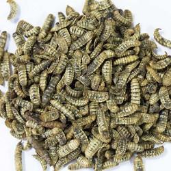Crispyworms APPI 15 Kg - Larve disidratate per uccelli