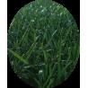 Mastetgreen di Bottos - Linea completa per il tappeto erboso