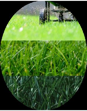 Sementi di alta qualità per il nostro prato e giardino
