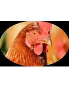 Repellenti naturali per animali