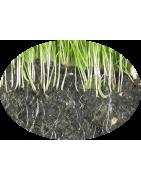 Fertilizzanti per prato