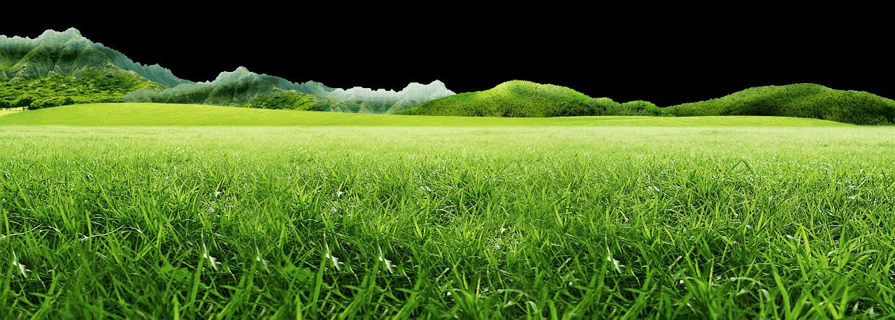 Con la creazione del portale IlPrato.store si è voluto dare ai nostri clienti il massimo servizio alla vendita di prodotti professionali per la cura e il mantenimento del tappeto erboso.